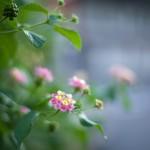 N Digital @ ISO 50, 1/25 sec. 50mm F/1.4. tadatomo, https://www.flickr.com/photos/tadatomo7/