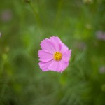 N Digital @ ISO 50, 1/720 sec. 50mm F/1.4. tadatomo, https://www.flickr.com/photos/tadatomo7/