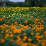 N Digital @ ISO 50, 1/60 sec. 50mm F/1.4. tadatomo, https://www.flickr.com/photos/tadatomo7/