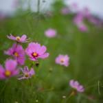 N Digital @ ISO 50, 1/1400 sec. 50mm F/1.4. tadatomo, https://www.flickr.com/photos/tadatomo7/