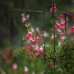 N Digital @ ISO 50, 1/125 sec. 50mm F/1.4. tadatomo, https://www.flickr.com/photos/tadatomo7/