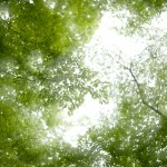 N Digital @ ISO 50, 1/2000 sec. 50mm F/1.4. tadatomo, https://www.flickr.com/photos/tadatomo7/