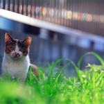 Canon EOS 6D @ ISO 1600, 1/250 sec. 244mm F/5.6. taniuniyana, http://www.flickr.com/photos/taniuniyana/