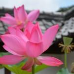 NIKON D7100 @ ISO 110, 1/250 sec. 62mm F/8. Shuhei Aso, http://www.flickr.com/photos/asoshu/