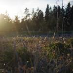 PENTAX K-30 @ ISO 200, 1/500 sec. 35mm F/2.4. Kimmo Nurminen, https://www.flickr.com/photos/kimmon/