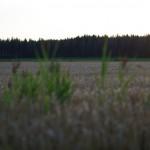 PENTAX K-30 @ ISO 200, 1/1000 sec. 50mm F/2. Kimmo Nurminen, https://www.flickr.com/photos/kimmon/