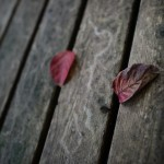 NIKON D610 @ ISO 100, 1/40 sec. 24mm F/1.4. Second Lake, https://www.flickr.com/photos/secondlake/
