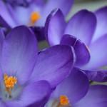 Canon EOS REBEL T1i @ ISO 3200, 1/640 sec. 55mm F/5.6. cb in bc, http://www.flickr.com/people/31583589@N04/