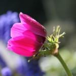 Canon EOS REBEL T1i @ ISO 100, 1/250 sec. 53mm F/5.6. cb in bc, http://www.flickr.com/people/31583589@N04/