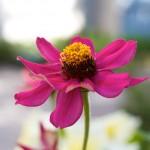 Canon EOS 550D @ ISO 100, 1/100 sec. 35mm F/5. Mikko Saari, http://www.flickr.com/people/mikkosaari/