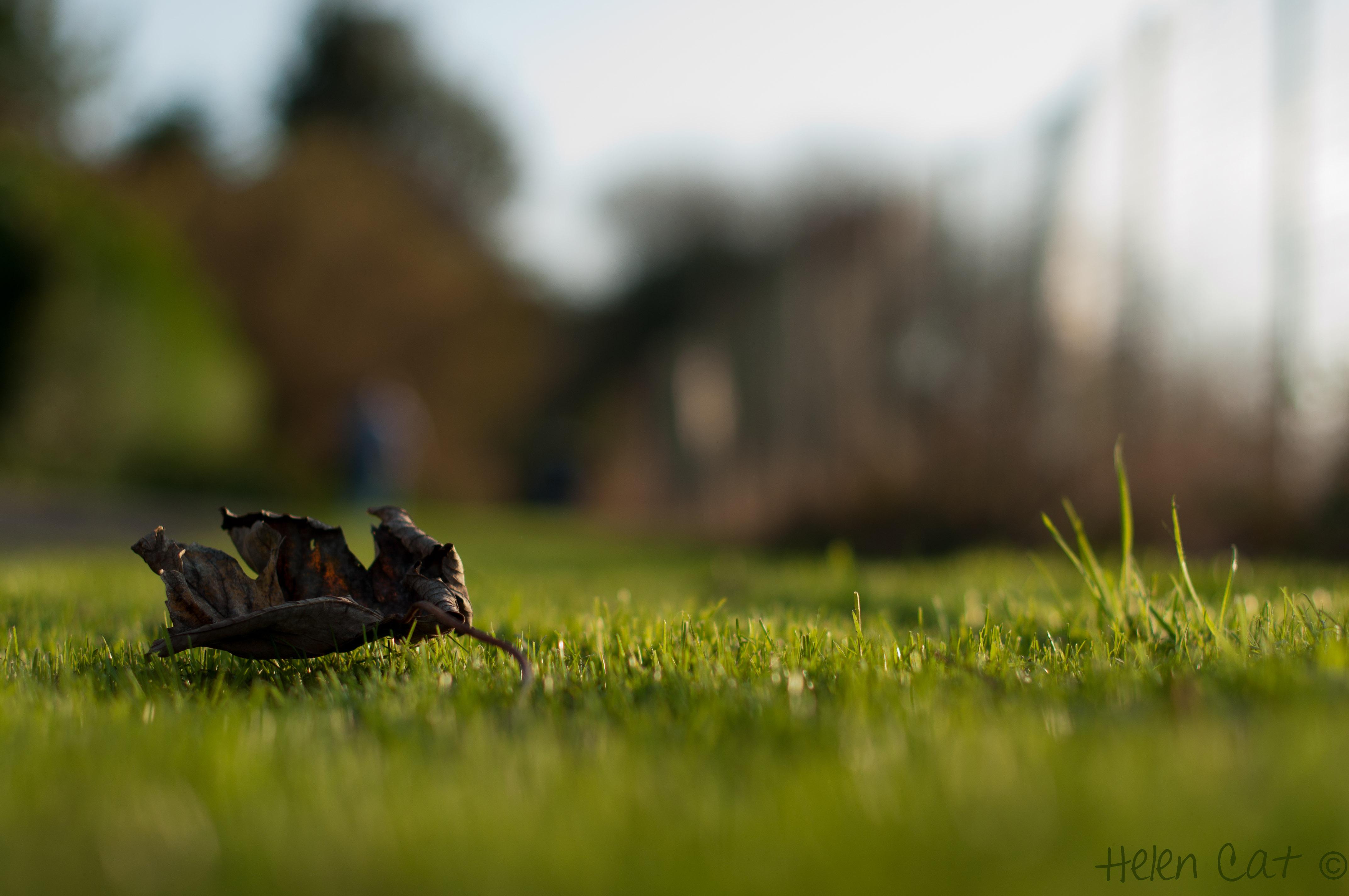 лужайка зелень трава фокус домик машинка скачать