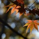 NIKON D7000 @ ISO 400, 1/320 sec. 120mm F/4. yuichi ikeuchi, http://www.flickr.com/people/uinside11/