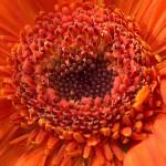 PENTAX K-5 @ ISO 800, 1/2 sec. 35mm F/9. Edzo Boven, http://www.flickr.com/people/edzoboven/