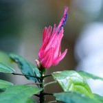 NIKON D80 @ ISO 640, 1/160 sec. 200mm F/4.2. herculean-floss, http://www.flickr.com/people/herculean-floss/
