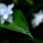 PENTAX K-5 @ ISO 160, 1/125 sec. 50mm F/2.8. Tohru NISHIMURA, http://www.flickr.com/people/tohru_nishimura/
