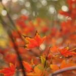 Canon EOS 650D @ ISO 100, 1/125 sec. 40mm F/2.8. yojn, http://www.flickr.com/photos/yojn/