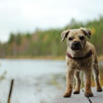 Canon EOS 600D @ ISO 100, 1/640 sec. 50mm F/1.8. Elsa Määttänen, http://www.flickr.com/people/hirttosolmu/