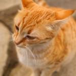 NEX-7 @ ISO 100, 1/640 sec. 24mm F/1.8. soner kaya, http://www.flickr.com/people/sonerkaya/