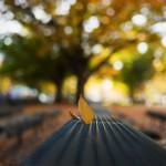 M9 Digital Camera @ ISO 160, 1/350 sec. 35mm F/2.4. hayasin, https://www.flickr.com/photos/hayasin55/