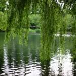 NIKON D610 @ ISO 100, 1/1250 sec. 50mm F/1.4. Second Lake, https://www.flickr.com/photos/secondlake/