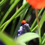 Canon EOS 550D @ ISO 100, 1/250 sec. 50mm F/2. photooe, http://www.flickr.com/photos/61400086@N05/