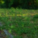 PENTAX K200D @ ISO 100, 1/400 sec. 50mm F/???. Amselchen, http://www.flickr.com/people/47567413@N03/