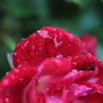 Canon EOS 550D @ ISO 200, 1/60 sec. 50mm F/2. photooe, http://www.flickr.com/photos/61400086@N05/