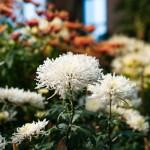 M8 Digital Camera @ ISO 160, 1/1000 sec. 50mm F/3.4. david, http://www.flickr.com/photos/hoodooyoudo/