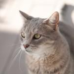 M8 Digital Camera @ ISO 160, 1/750 sec. 50mm F/4. david, http://www.flickr.com/photos/hoodooyoudo/