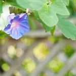 M8 Digital Camera @ ISO 160, 1/180 sec. 50mm F/2.8. david, http://www.flickr.com/photos/hoodooyoudo/
