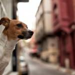 NIKON D700 @ ISO 400, 1/500 sec. 35mm F/1.8. OzgurDortyol, http://www.flickr.com/people/ozgurdortyol/