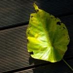 M9 Digital Camera @ ISO 160, 1/500 sec. 75mm F/2. Chandler Chou, http://www.flickr.com/people/chandler_chou/