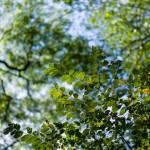 M9 Digital Camera @ ISO 160, 1/2000 sec. 75mm F/2.8. Chandler Chou, http://www.flickr.com/people/chandler_chou/