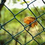 NIKON D700 @ ISO ???, 1/50 sec. 28mm F/2. emtl, http://www.flickr.com/people/eddymtl/
