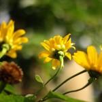 Canon EOS 60D @ ISO 200, 1/4000 sec. 50mm F/2. hylinktree, http://www.flickr.com/people/hylinktree/