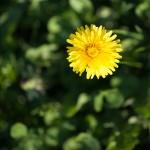 Canon EOS 5D Mark II @ ISO 100, 1/800 sec. 135mm F/2. photooe, http://www.flickr.com/photos/61400086@N05/