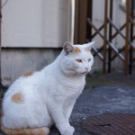 NEX-5N @ ISO 100, 1/400 sec. 35mm F/2.5. Yoshiyuki Mimura, http://www.flickr.com/people/mimura1018/