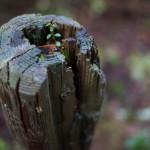 Canon EOS 6D @ ISO 200, 1/60 sec. 35mm F/2. Megan Zabel Holmes, http://www.flickr.com/photos/92620877@N04/