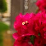 Canon EOS REBEL T2i @ ISO 200, 1/640 sec. ???mm F/???. kaikeiau, https://www.flickr.com/photos/71814774@N00/