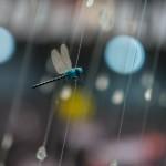 X-E1 @ ISO 200, 1/110 sec. 56mm F/1.2. Tam Nguyen, https://www.flickr.com/photos/surisuka/