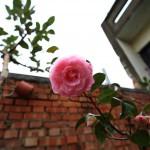 Canon EOS 6D @ ISO 320, 1/80 sec. 16mm F/4. 436027, https://www.flickr.com/photos/108104184@N07/