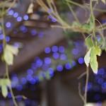 Canon EOS 60D @ ISO 100, 1/200 sec. 50mm F/1.8. Fernie Rey, https://www.flickr.com/photos/134579717@N08/